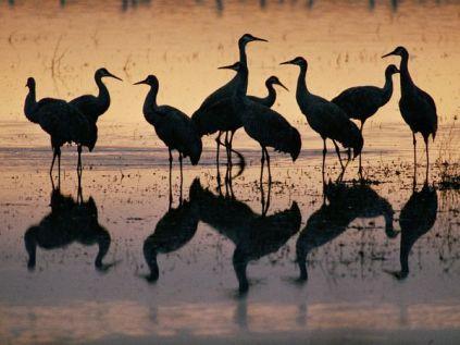 reflections-cranes
